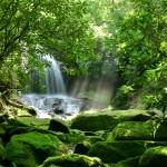 Biodiversità di un ecosistema.
