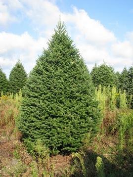 Albero di Natale ecologico e naturale