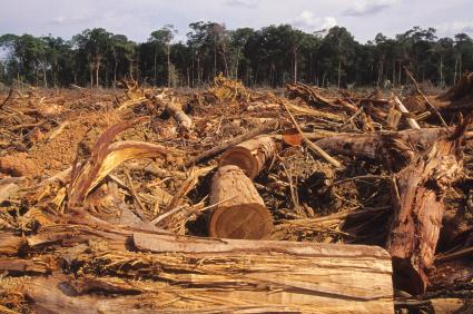 La deforestazione.