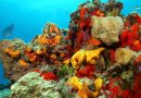 Spugna di mare in ambiente naturale.